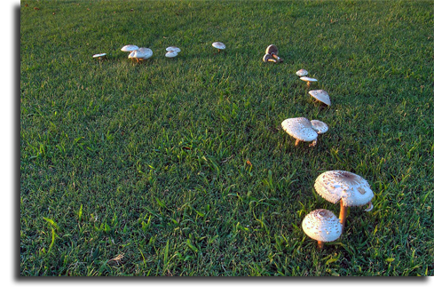 toadstools growing in a lawn, Denver lawn care